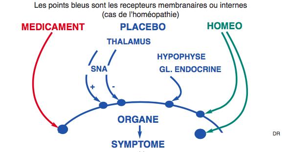 schéma du fonctionnement du placebo et l'homéopathie